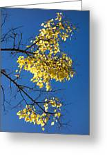 Yellow Leaves In Fall And Deep Blue Sky Greeting Card