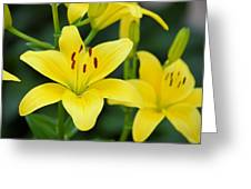 Yellow Lilly 8107 Greeting Card