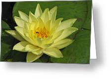 yellow lilly I Greeting Card