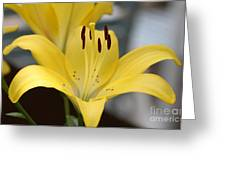 Yellow Lilly Greeting Card