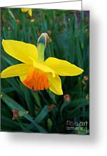Yellow Lily Flower Greeting Card