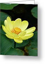 Yellow Lotus Greeting Card