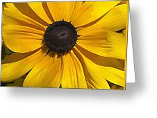 Yellow Macro Greeting Card