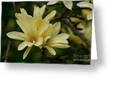 Yellow Magnolia Greeting Card