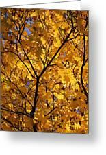 Yellow Maple 3 Greeting Card