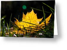 Yellow Maple Leaf Greeting Card