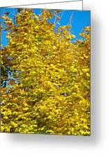 Yellow Maple Greeting Card