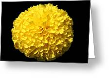 Yellow Marigold Greeting Card