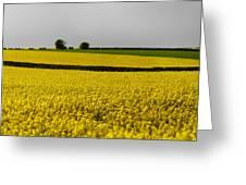 Yellow Mellow  Greeting Card