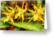 Yellow Miltassia Orchids Greeting Card