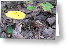 Yellow Mushroom Greeting Card