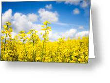 Yellow Mustard Field Greeting Card