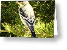 Yellow N Black Finch Greeting Card
