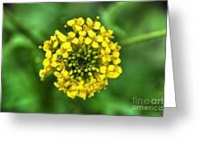 Yellow On Green Greeting Card