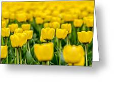 Yellow On My Mind Greeting Card