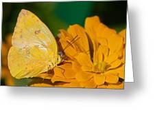 Yellow On Yellow Greeting Card