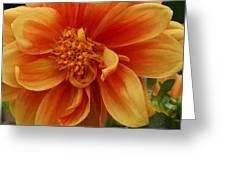 Yellow Orange Dahlia Greeting Card