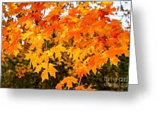 Yellow Orange Fall Tree Greeting Card