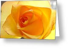 Yellow Orange Rose Greeting Card