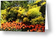 Yellow Orange - Springtime Greeting Card