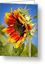 Yellow Orange Sunflower Greeting Card