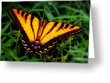 Yellow Orange Tiger Swallowtail Butterfly Greeting Card