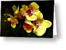 Yellow Orchids Shadow And Light Greeting Card