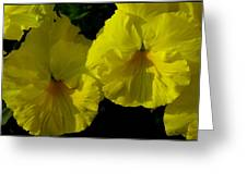Yellow Pansies  Greeting Card