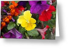 Yellow Pansy  Greeting Card by Donald Torgerson
