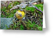 Yellow Patches Baby Mushroom - Amanita Muscaria Greeting Card