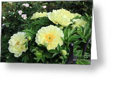 Yellow Peonies Greeting Card