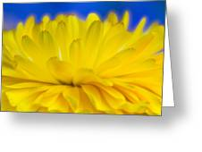 Yellow Petal Explosion Greeting Card