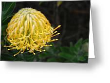 Yellow Pincushion Protea Greeting Card