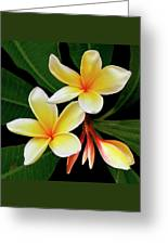 Yellow Plumeria Greeting Card by Ben and Raisa Gertsberg