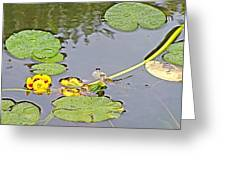 Yellow Pond Lilies On Lake Yellowhead Along Yellowhead Highway-b Greeting Card