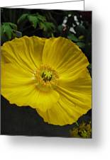 Yellow Poppie Greeting Card