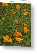 Yellow Poppies Dsc07460 Greeting Card