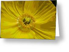 Yellow Poppy Flower Greeting Card