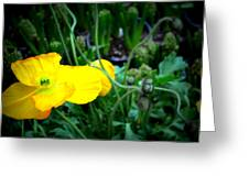 Yellow Poppy Xl Format Floral Photography Greeting Card