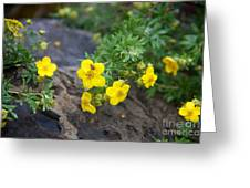 Yellow Potentilla Shrub Greeting Card