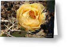 Yellow Prickly Pear Greeting Card