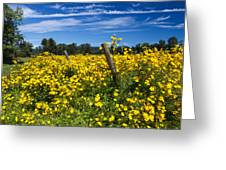 Yellow Profusion Greeting Card