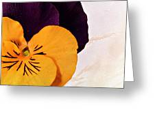 Yellow Purple Pansy Greeting Card