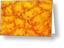 Yellow Radiance  Greeting Card