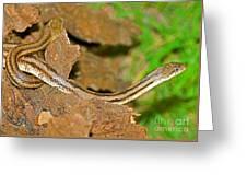 Yellow Rat Snakes Greeting Card