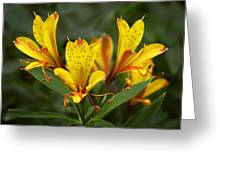 Yellow Red Flower Greeting Card