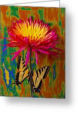 Yellow Red Mum With Yellow Black Butterfly Greeting Card