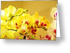 Yellow Red Orchid Flowers Art Prints Orchids Greeting Card