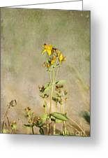 Yellow-red Wildflower With Texture Greeting Card
