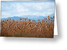Yellow Reeds And Blue Mountains Greeting Card